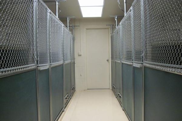 kbl-kennel-gF3049100-EDD9-32AC-A950-8F99B516D739.jpg