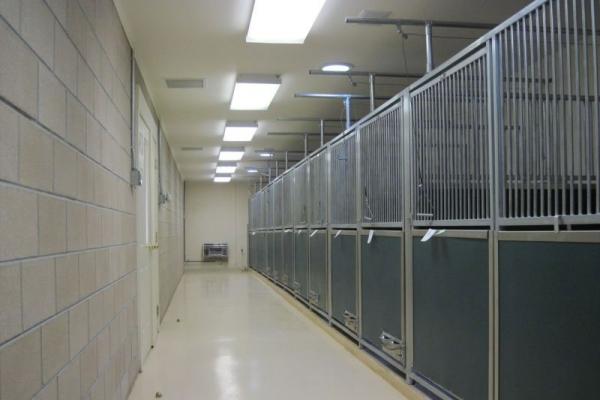 kbl-kennel-f1D4A451F-680F-1AE2-82F1-533F130FC152.jpg